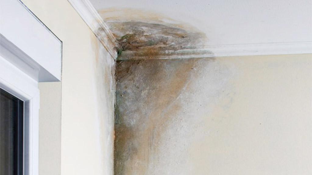 causas de la humeda en paredes