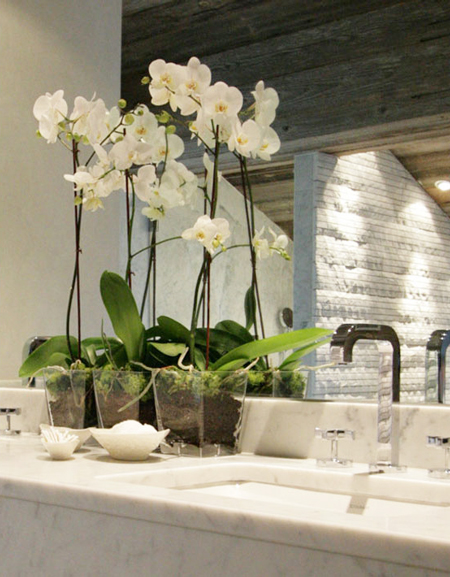 orquideas-decoracion