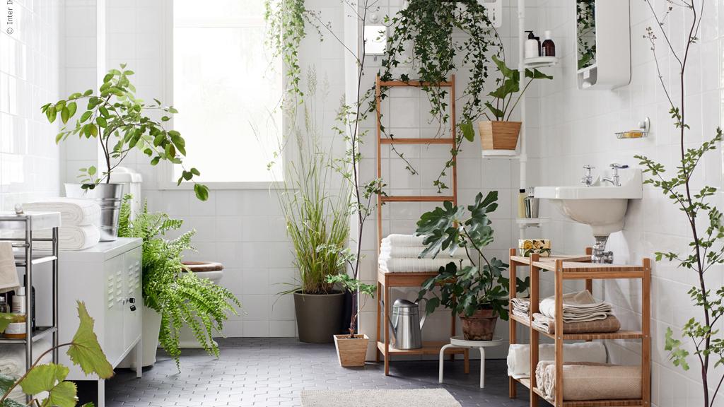 plantas para bano