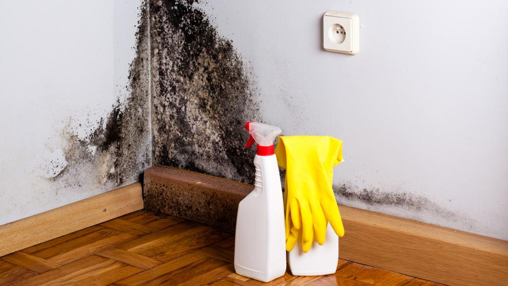 quitar el moho de las paredes
