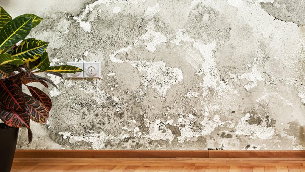 humedad en paredes protegelas del salitre