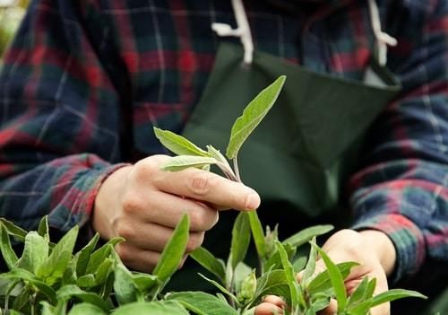 Consejos para el cuidado de tu jardín durante la cuarentena