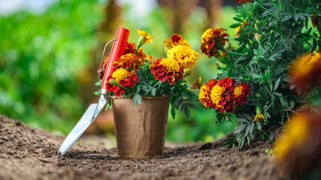 Sabes cómo lograr que el jardín de tu hogar luzca increíble
