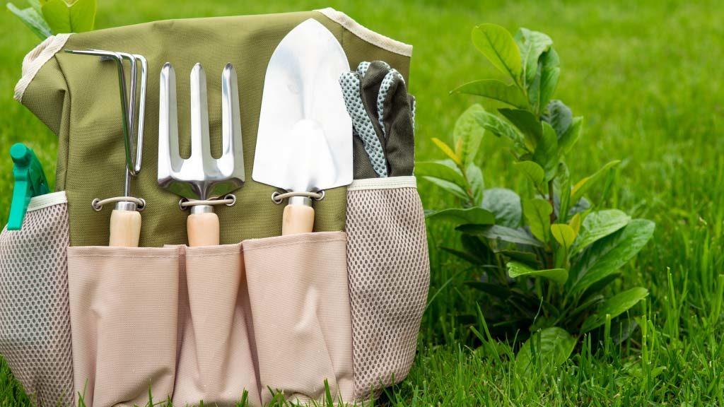 Como cuidar tu jardin durante la temporada de lluvia