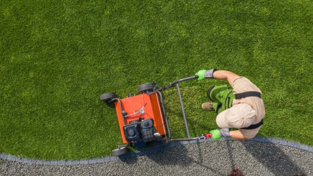 Cuales son las herramientas basicas para el cuidado de tu jardin3